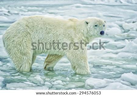 Male polar bear standing in ice on shore of Hudson Bay, photo art - stock photo