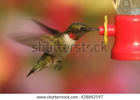 Male Ruby-throated Hummingbird (archilochus colubris) in flight at a feeder with a colorful background - stock photo