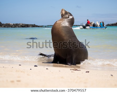 Male sea lion on the beach with tourists in the background, Santa Fe Island, Galapagos - stock photo