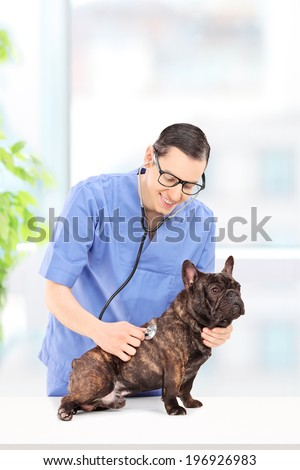 Male veterinarian examining a dog at a veterinary practice  - stock photo