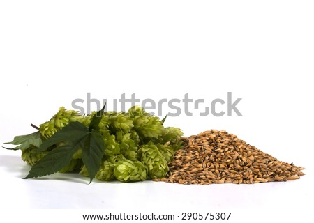 malt and hops - stock photo