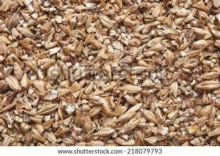 malt as background  - stock photo