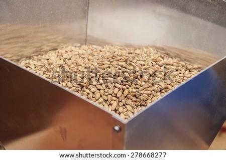 malt, macro - stock photo