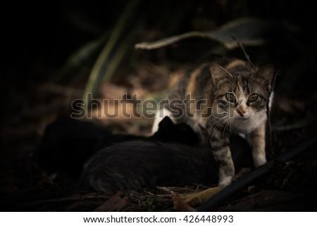 mama cat - stock photo