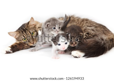 Mama-cat with three kittens on white background - stock photo