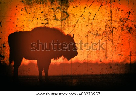 Mammals - European bison (Bison bonasus) on sundown. Old photograph stylized with scratches and dust. Old, analog photography filter. - stock photo