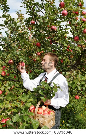 Man and apple tree. - stock photo