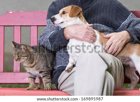 Man cuddling dog and cat sitting next to them on bench - stock photo