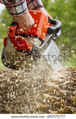 Man cuts a fallen tree. - stock photo