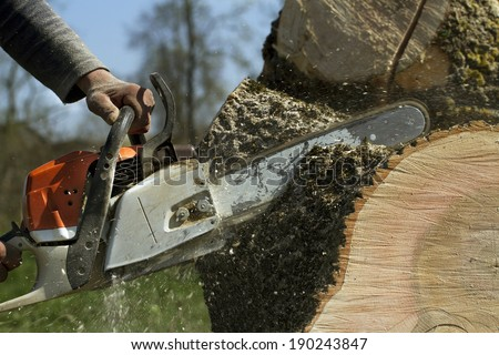 Man cuts a fallen tree, dangerous work.  - stock photo