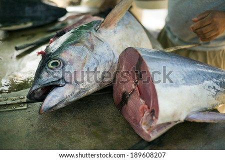 Man cutting big tuna fish close up shoot - stock photo