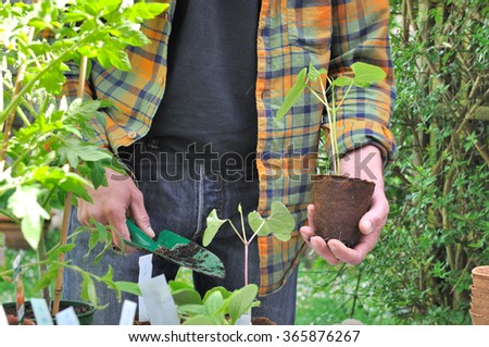 man getting ready to plant his bean seedlings - stock photo