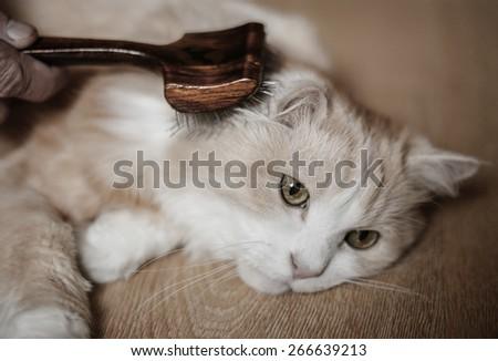 Man grooming cat - stock photo