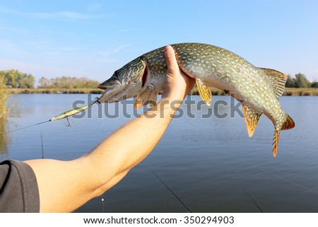 man hand holding pike fish - stock photo
