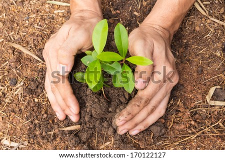 Man hands planting a small plant concept of ecology - stock photo