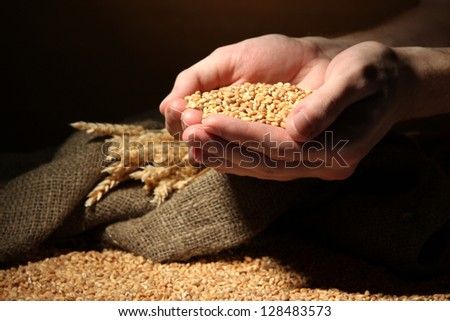 man hands with grain, on brown background - stock photo