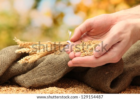 man hands with grain, on green background - stock photo