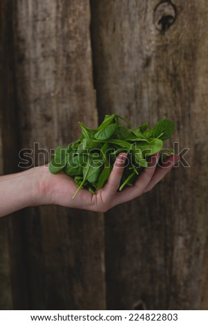 Man holding delicious, fresh heap of spinach - stock photo