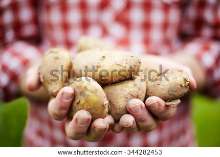 Man Holding Freshly Picked Jersey Royal New Potatoes - stock photo