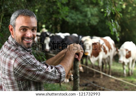 Man in front of cows - stock photo