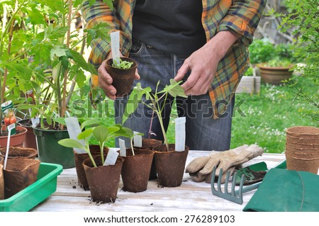 man in his garden with growing pot in front of him on a table - stock photo