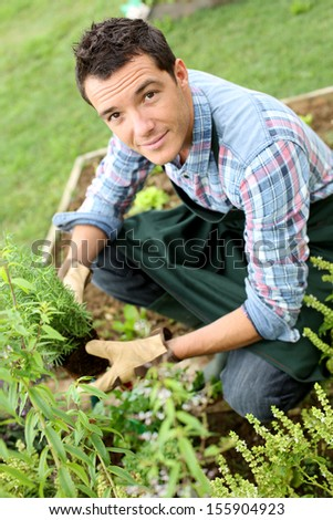 Man in vegetable garden planting aromatic herbs - stock photo