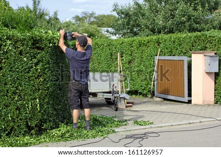 Man is cutting a hedge - stock photo