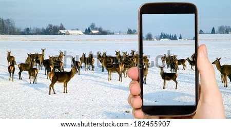 Man is taking photo of deers with smart mobile phone - stock photo