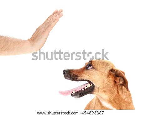 Man is training dog by stopping it - stock photo