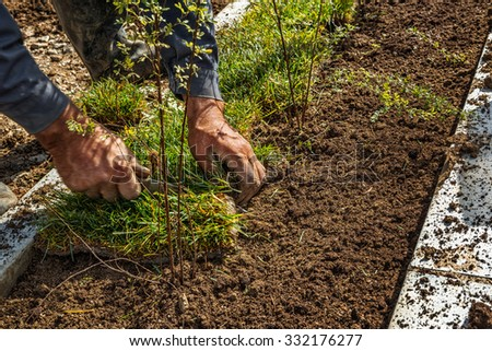 Man laying sod for new garden lawn - stock photo