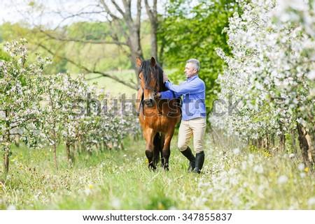Man leading a bay horse. - stock photo