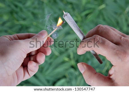 Man lighting a cigarette. Detail hand holding a marijuana cigarette in the background of marijuana leaves. Lighting cigarette close up. Using recreational soft drug. Burning marijuana. Smoke marijuana - stock photo