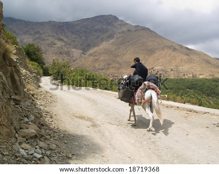 Man on the mule, transportation backpack. Atlas mountain, Morocco - stock photo