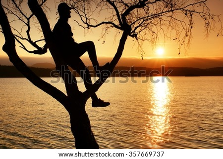 Man on tree. Silhouette of  lone man sit on branch of birch tree  in front of the sunset at shoreline. - stock photo