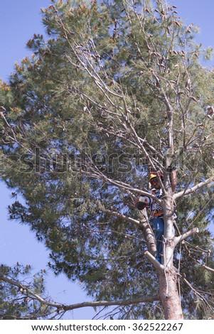 man pruning tree - stock photo