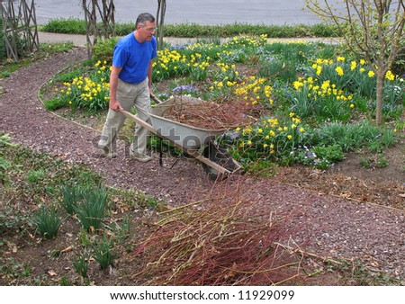 Man pushing wheelbarrow filled with red twig dogwood trimmings - stock photo