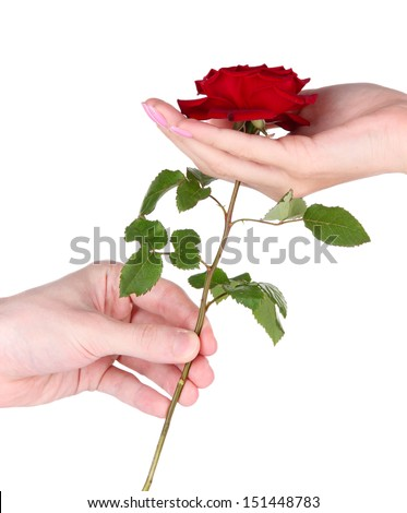 Man's hand giving a rose isolated on white - stock photo