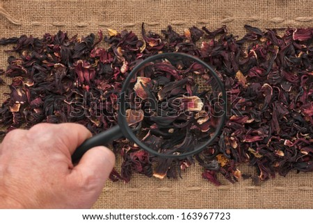 Man's hand with magnifying glass over hibiscus and burlap - stock photo