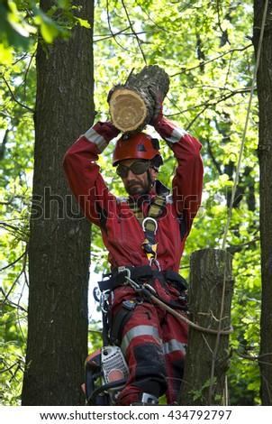 Man saws oak at height - stock photo
