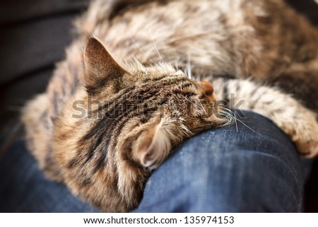 man sitting on armchair holding and petting pet cat - stock photo