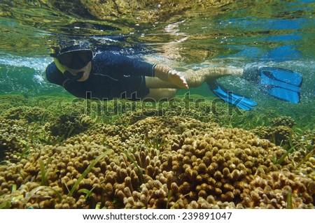 Man snorkeler over coral reef, Bocas del Toro, Panama, Caribbean sea - stock photo