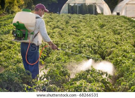 Man spraying vegetables in the garden - stock photo