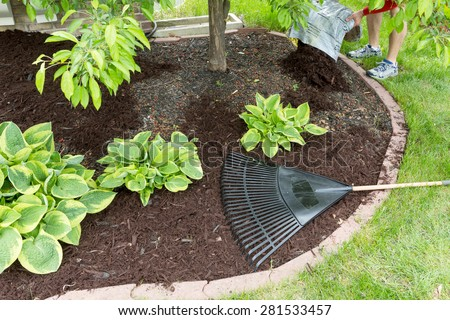 Man spreading mulch in the garden emptying a sack of organic bark onto a flowerbed to be spread with a rake, view of his feet in the back of the frame with focus to the plants in the bed - stock photo