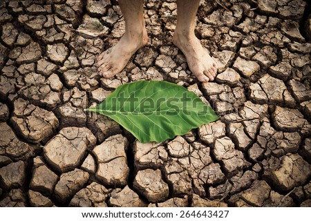 man standing on a dry cracked earth with green leaf on the ground - stock photo