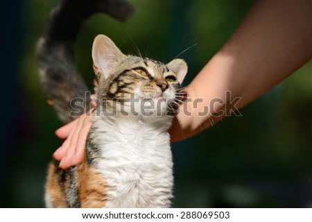 man stroking a small kitten - stock photo