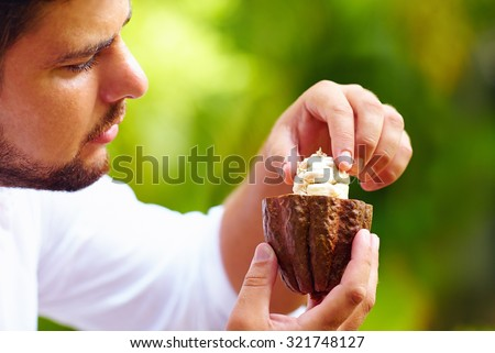 man taking out beans from open cocoa pod - stock photo