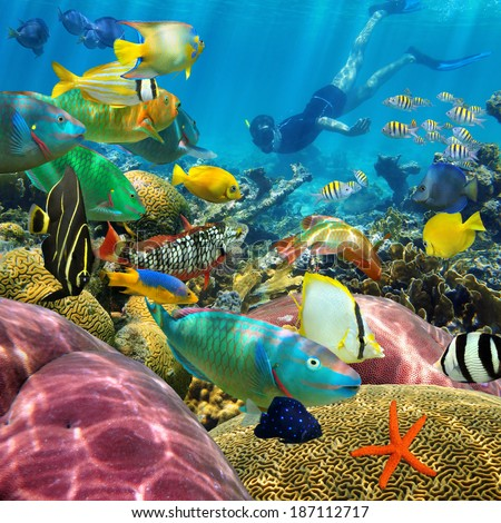 Man underwater swims in a colorful coral reef with tropical fish - stock photo