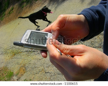 "Man walking dog receives ""pick up Dog Food"" Blackberry message. - stock photo"