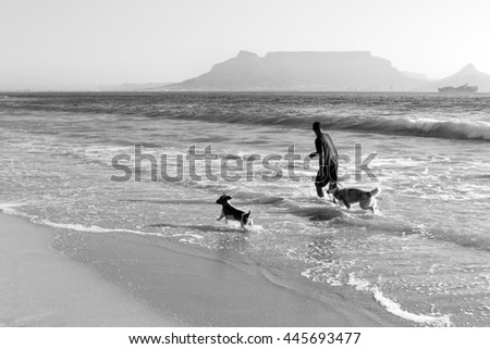 Man walking his dogs, South Africa, Cape Town - stock photo
