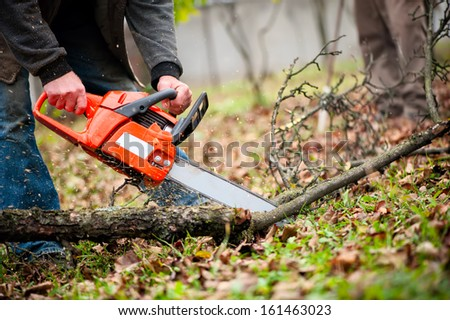 man with gasoline powered chainsaw cutting fire wood from trees in forest - stock photo